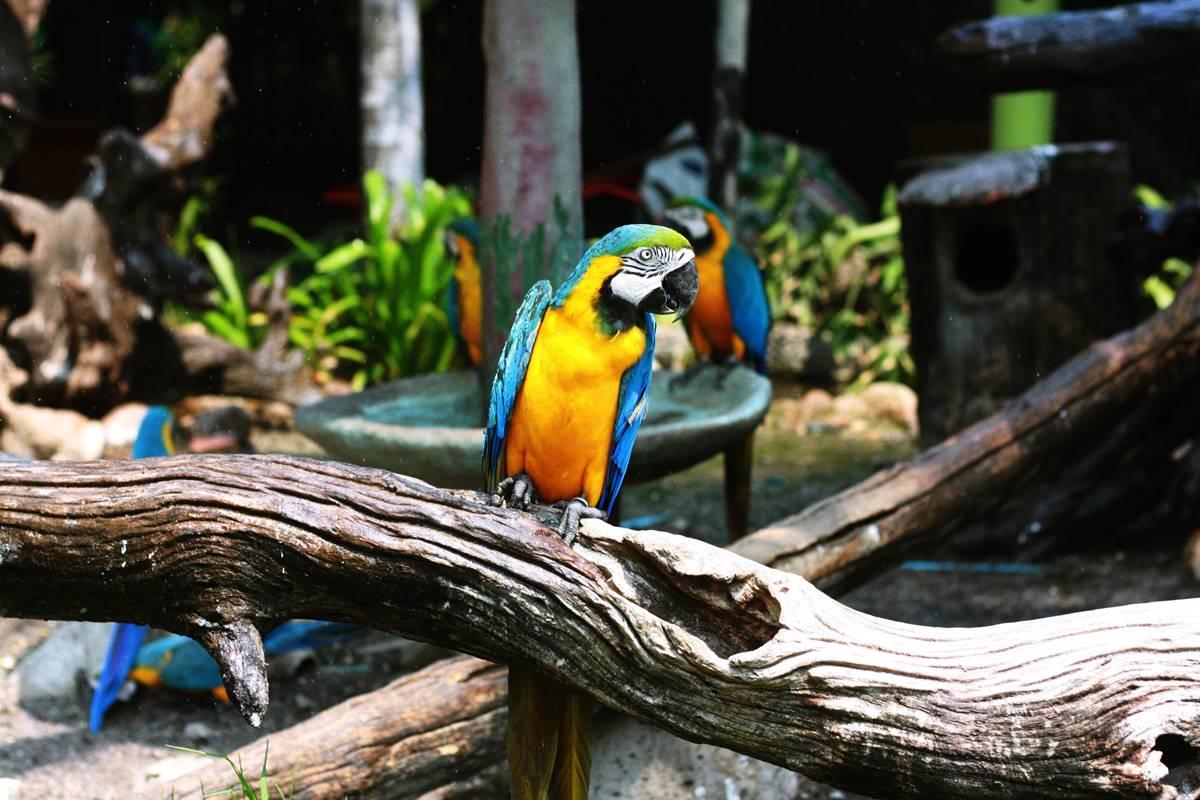 Zoo Project - Church WordPress Theme