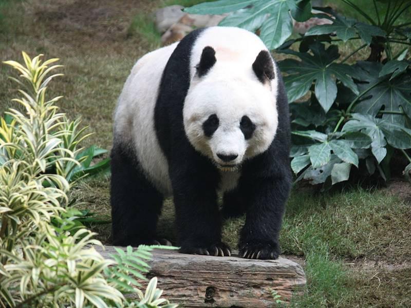 Panda Project