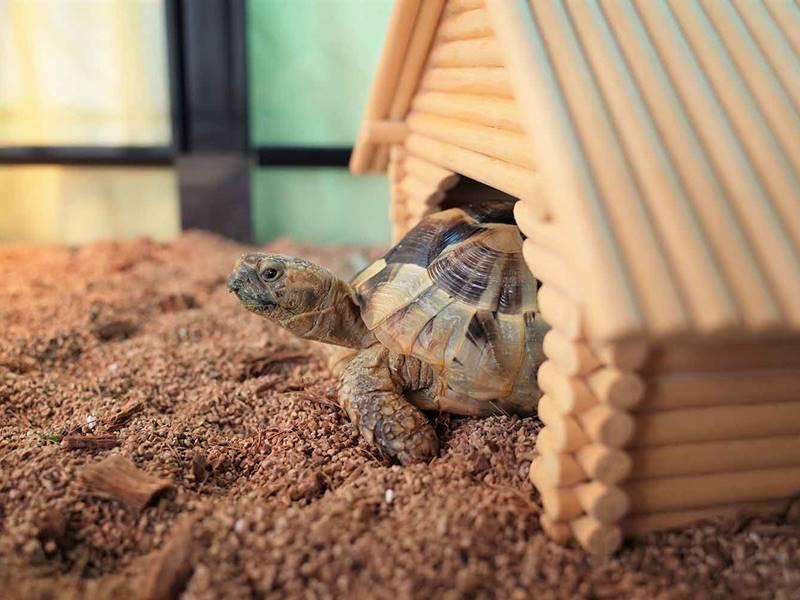 Teen Turtle
